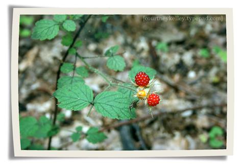 Woods 04 blog