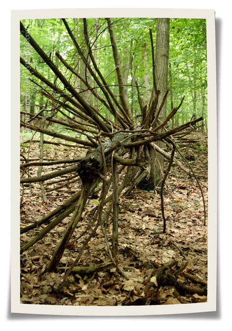 Woods 05 blog
