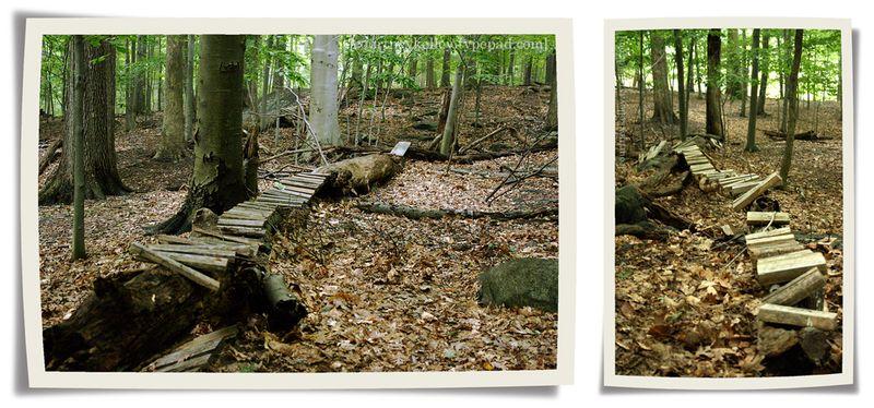 Woods 02a