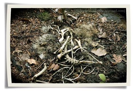 Woods 06 blog